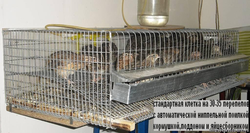 Вышивка гладью воротнички 42